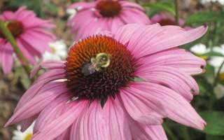 Please Support the Susanna Wesley Prayer Garden